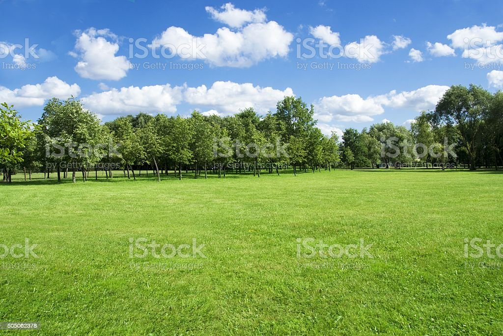 Summer landscape of grass and trees stock photo