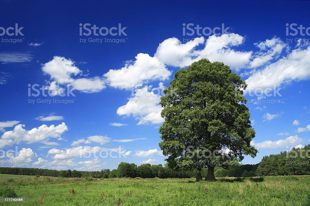 Summer Landscape royalty-free stock photo
