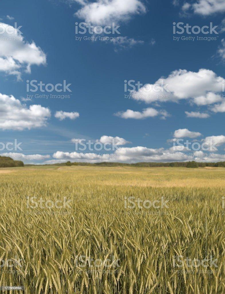 Summer landscape. royalty-free stock photo