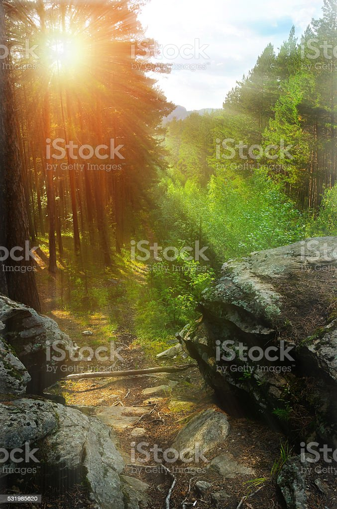 Summer landscape - sunrise in the mountain forest stock photo