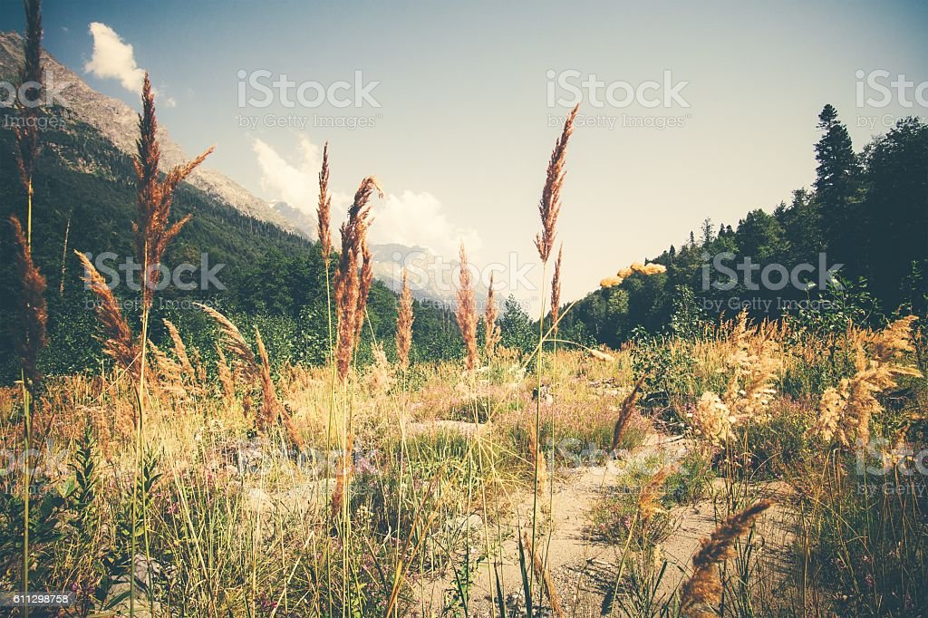 Summer Landscape valley and forest in mountains stock photo