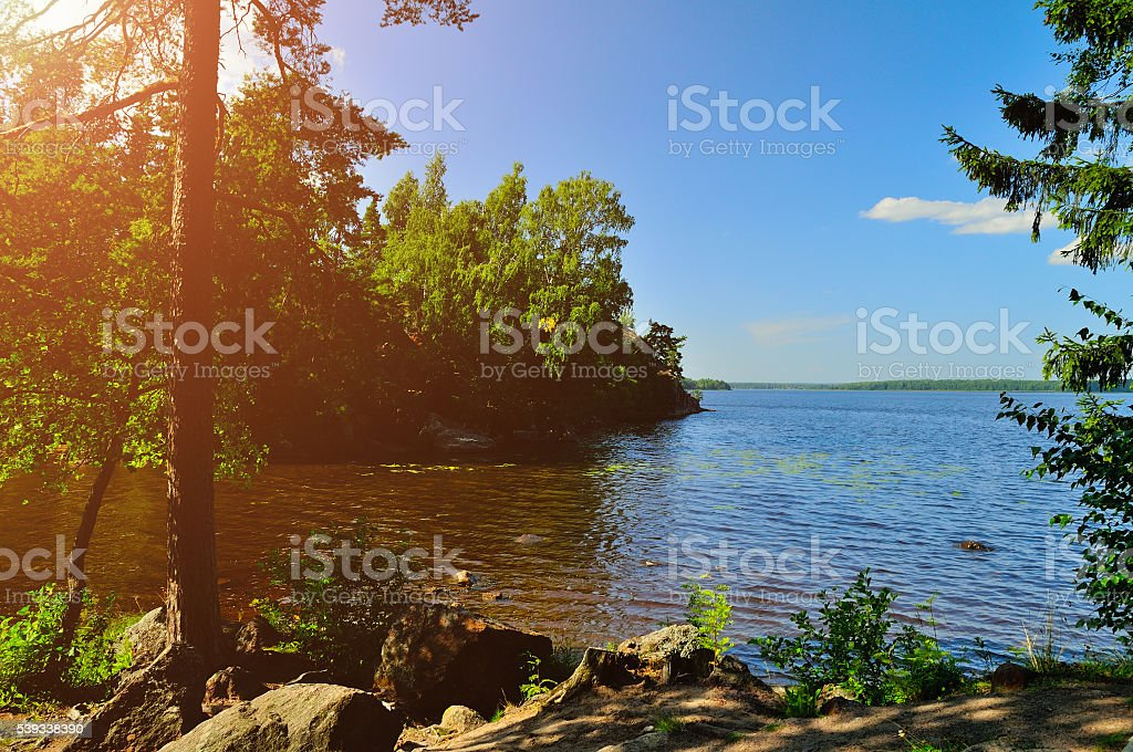 Summer landscape view of pine tree at the coast of stock photo