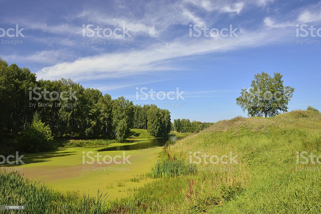 Summer landscape with a lake royalty-free stock photo