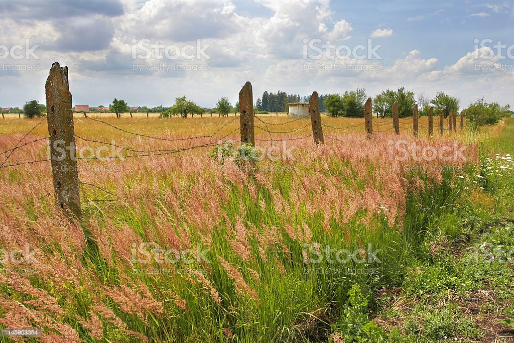 Summer landscape with barbed wire fence royalty-free stock photo