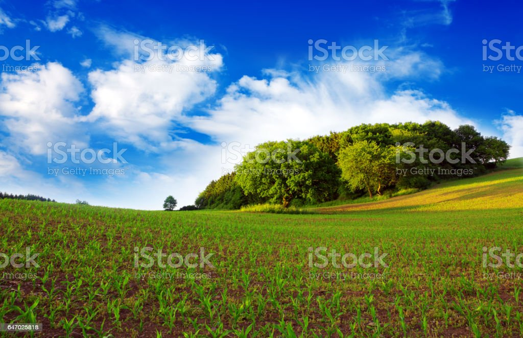 Summer landscape with corn field and clouds stock photo