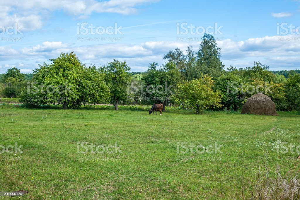 summer landscape with cow stock photo
