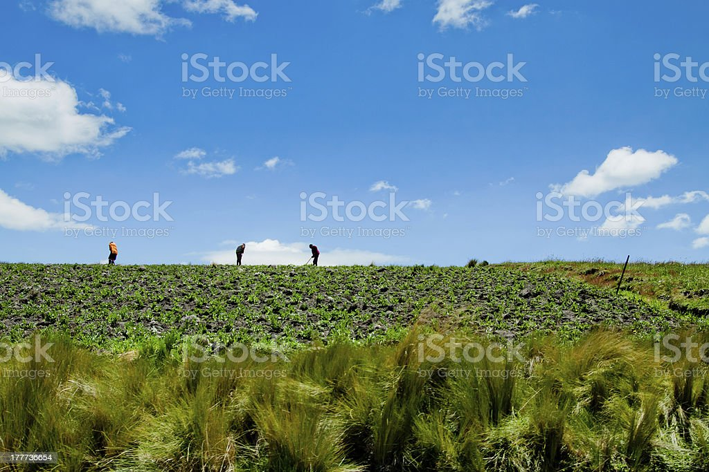 Summer Landscape with crops Field and Clouds royalty-free stock photo