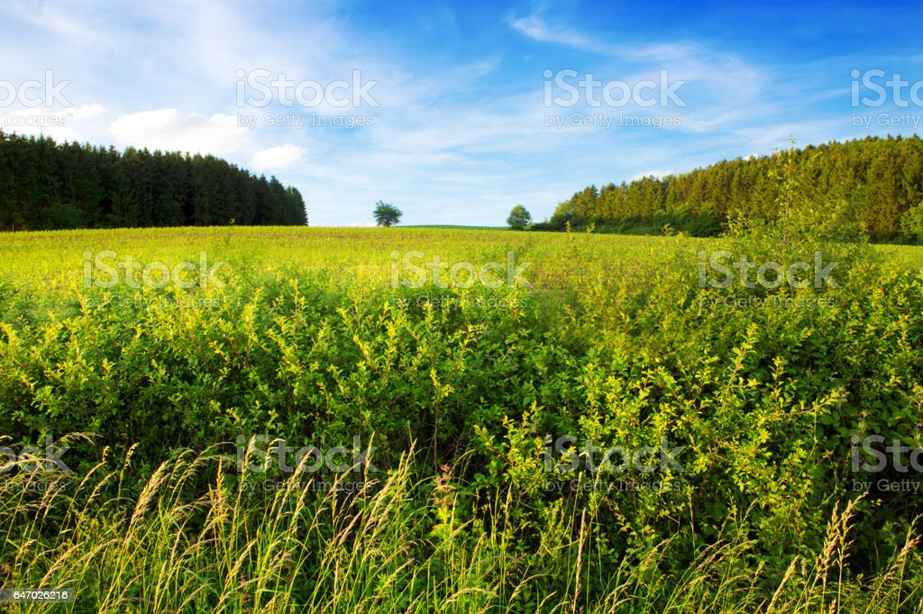 Summer landscape with field and clouds stock photo