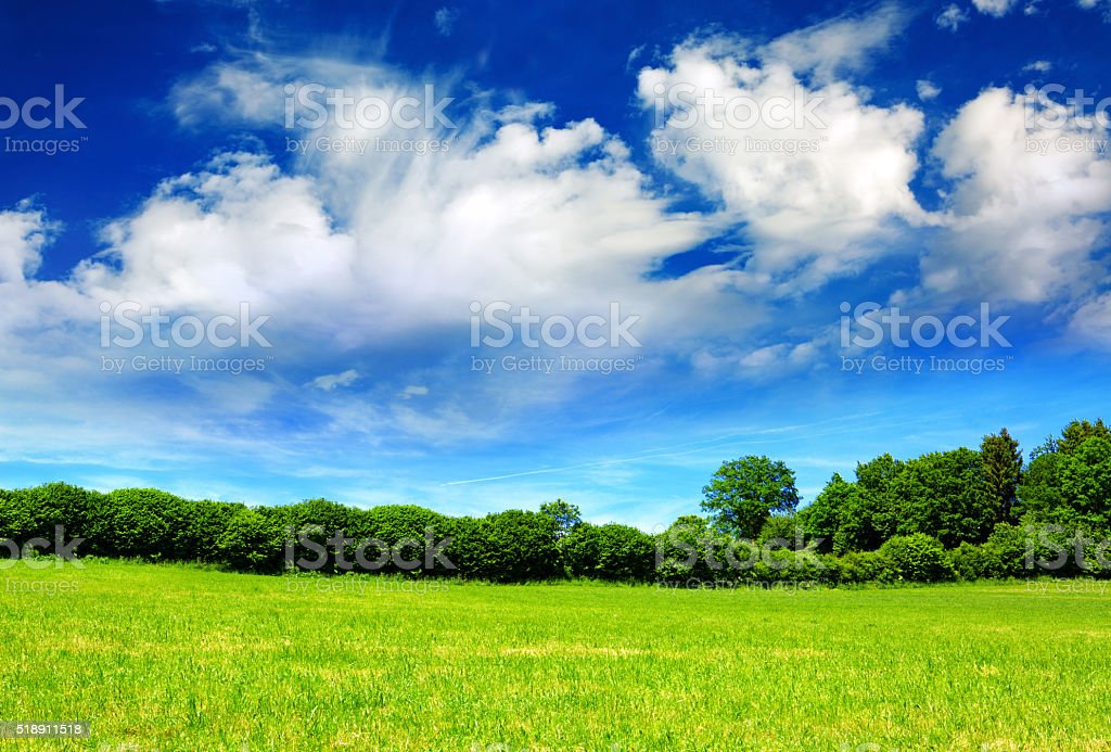 Summer landscape with field and trees. stock photo