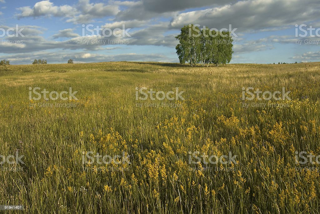 Summer landscape with field, tree, sky and clouds royalty-free stock photo