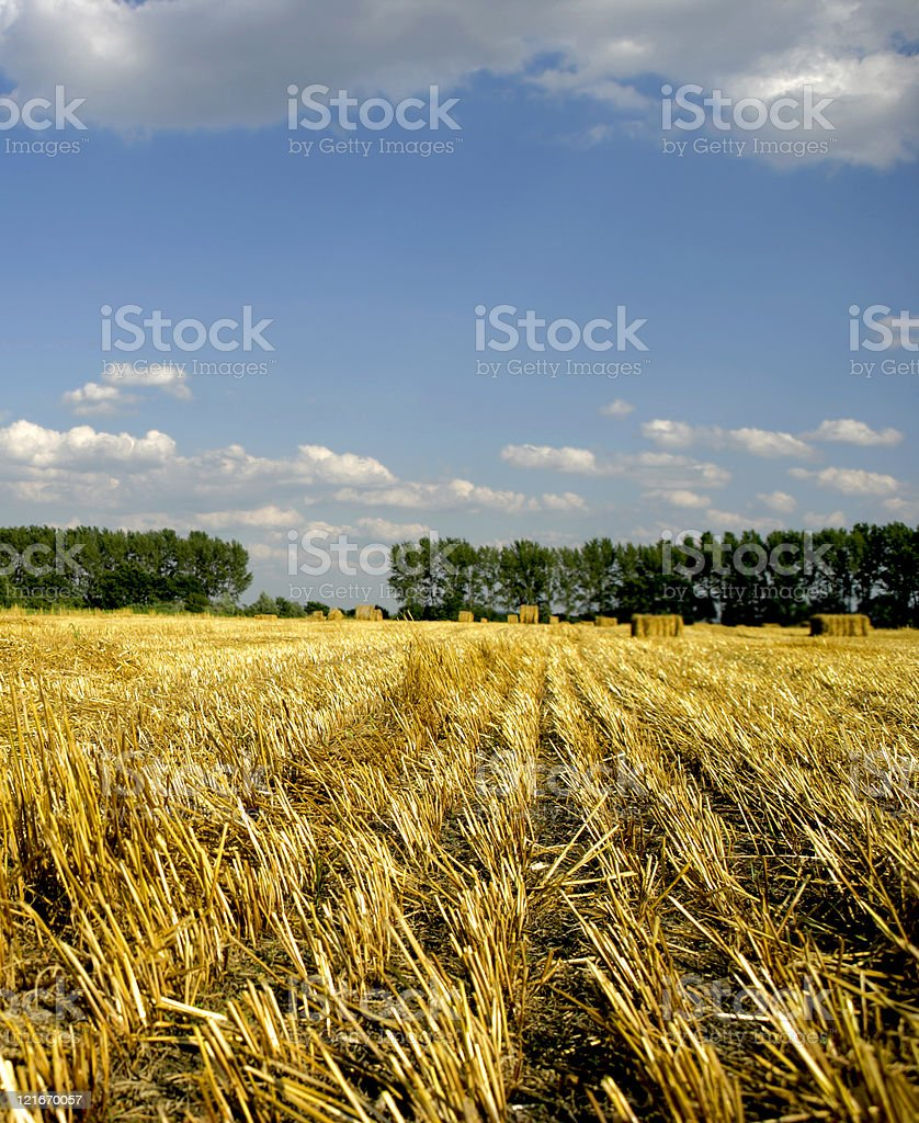 Summer landscape with field under cloudy sky royalty-free stock photo