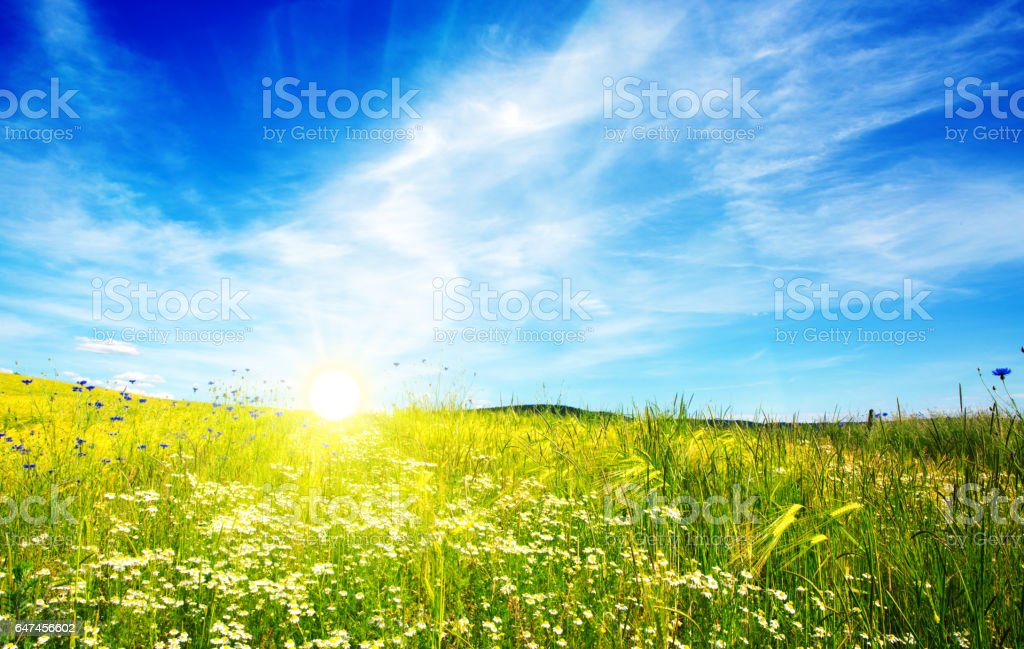 Summer landscape with flower meadof and clouds stock photo