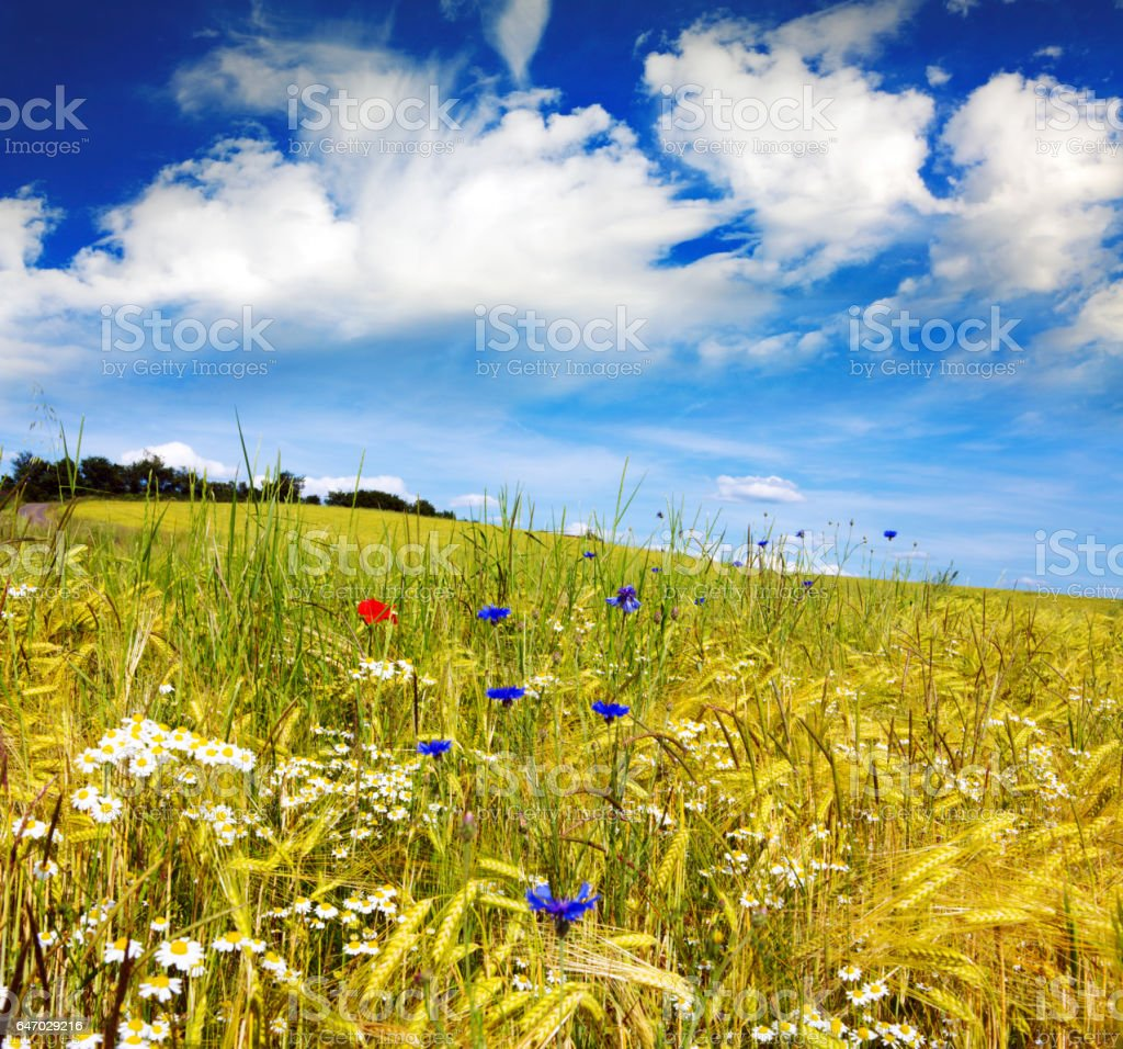 Summer landscape with  flower meadow und cloud stock photo