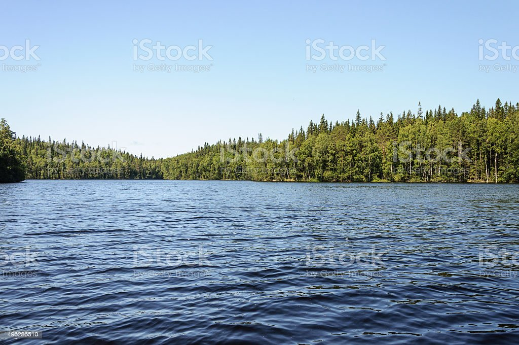 Summer landscape with forest lake stock photo