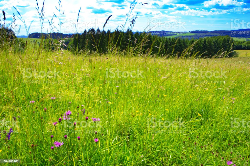Summer landscape with green grass stock photo