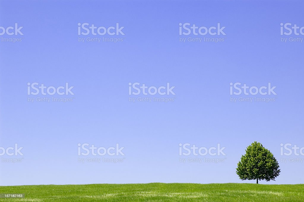 Summer landscape with lonely tree royalty-free stock photo