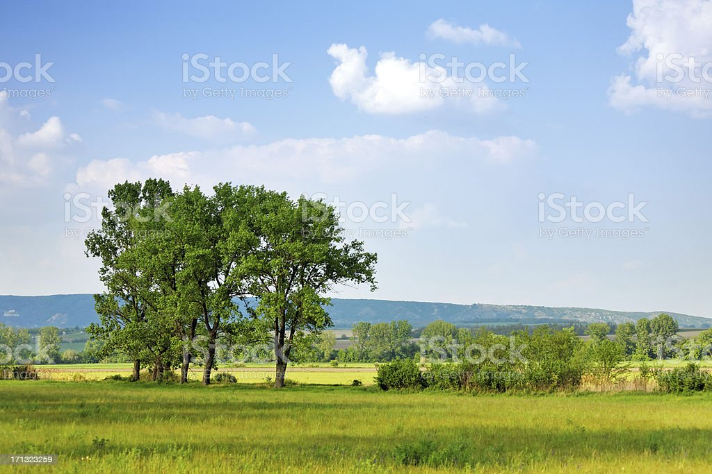 summer landscape with rapeseed fields stock photo