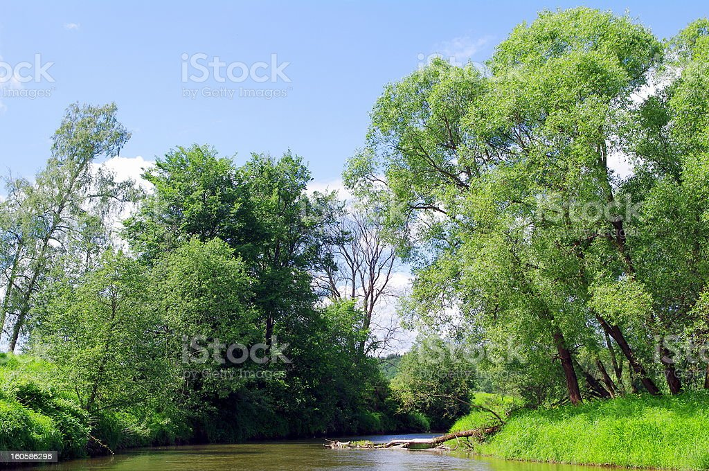 summer landscape with river royalty-free stock photo