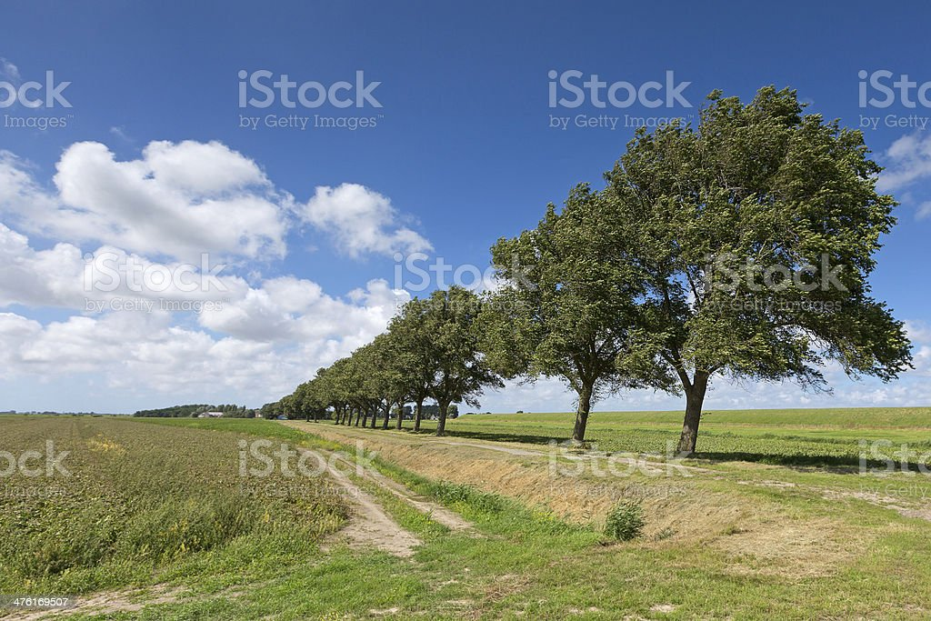 summer landscape with trees royalty-free stock photo