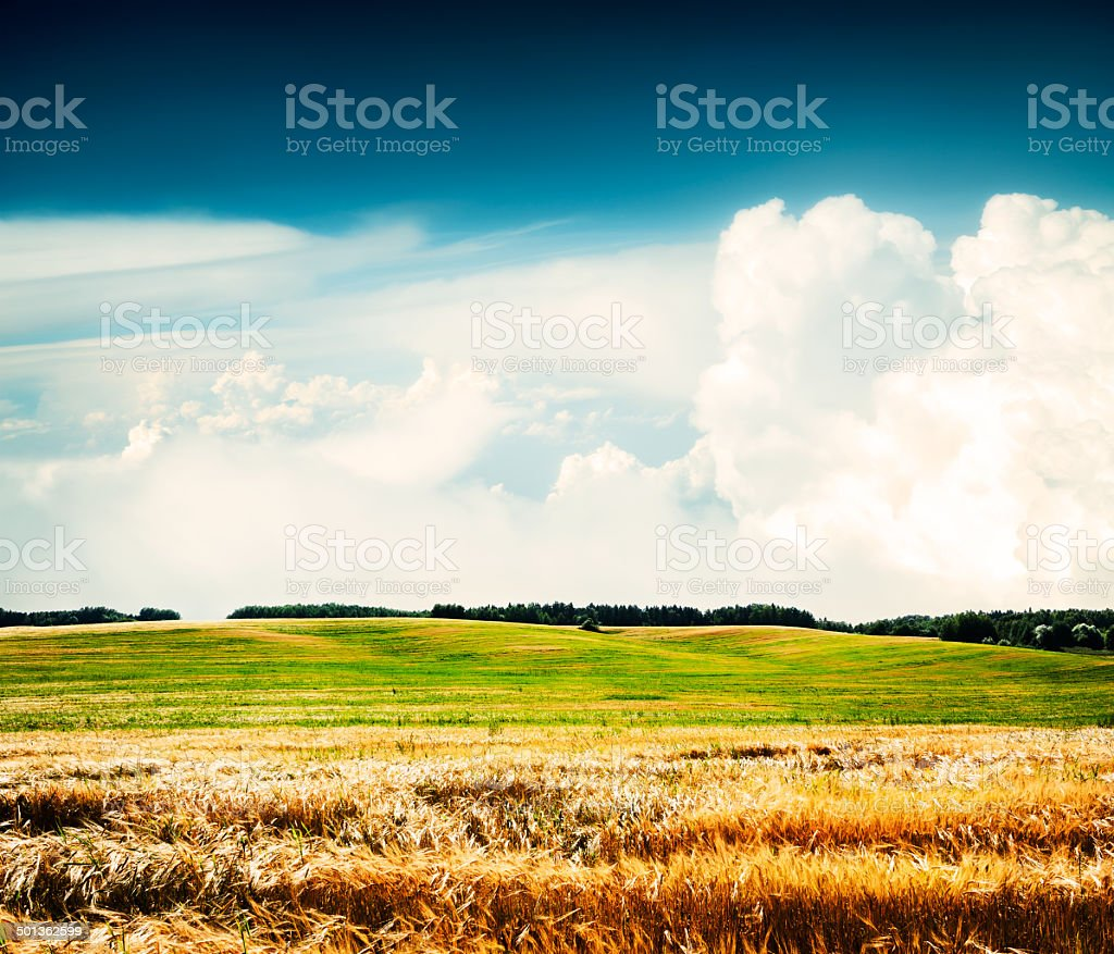 Summer Landscape with Wheat Field and Clouds royalty-free stock photo