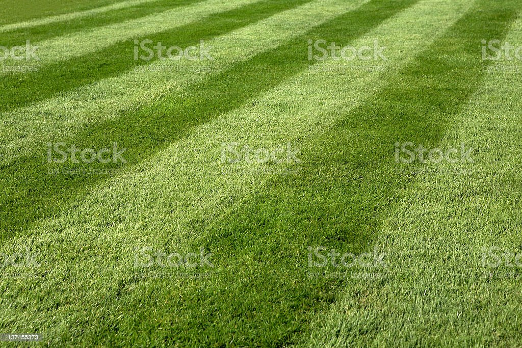 Summer Lawn royalty-free stock photo