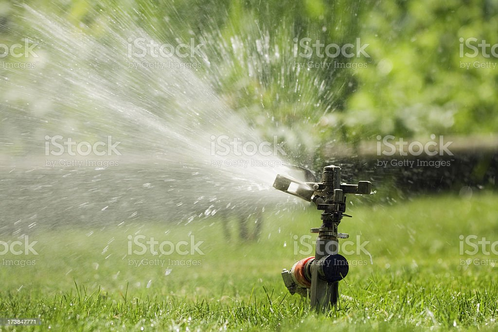 Summer Lawn Sprinkler Watering Lawn, Irrigation Action for Green Grass stock photo