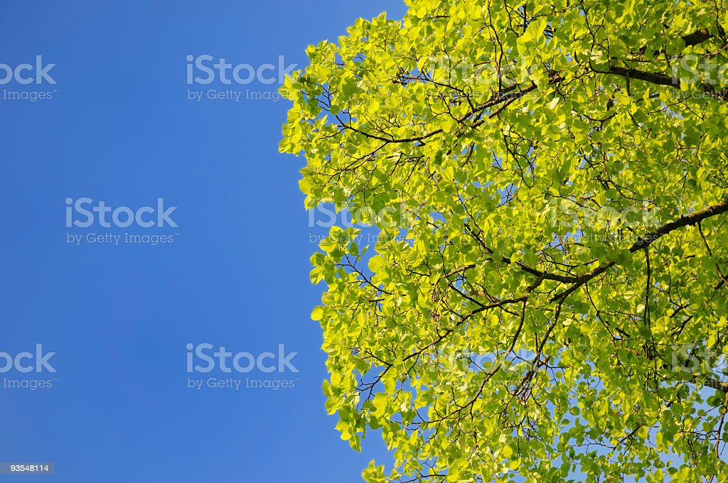 Summer Leaves With Copyspace (XL) royalty-free stock photo