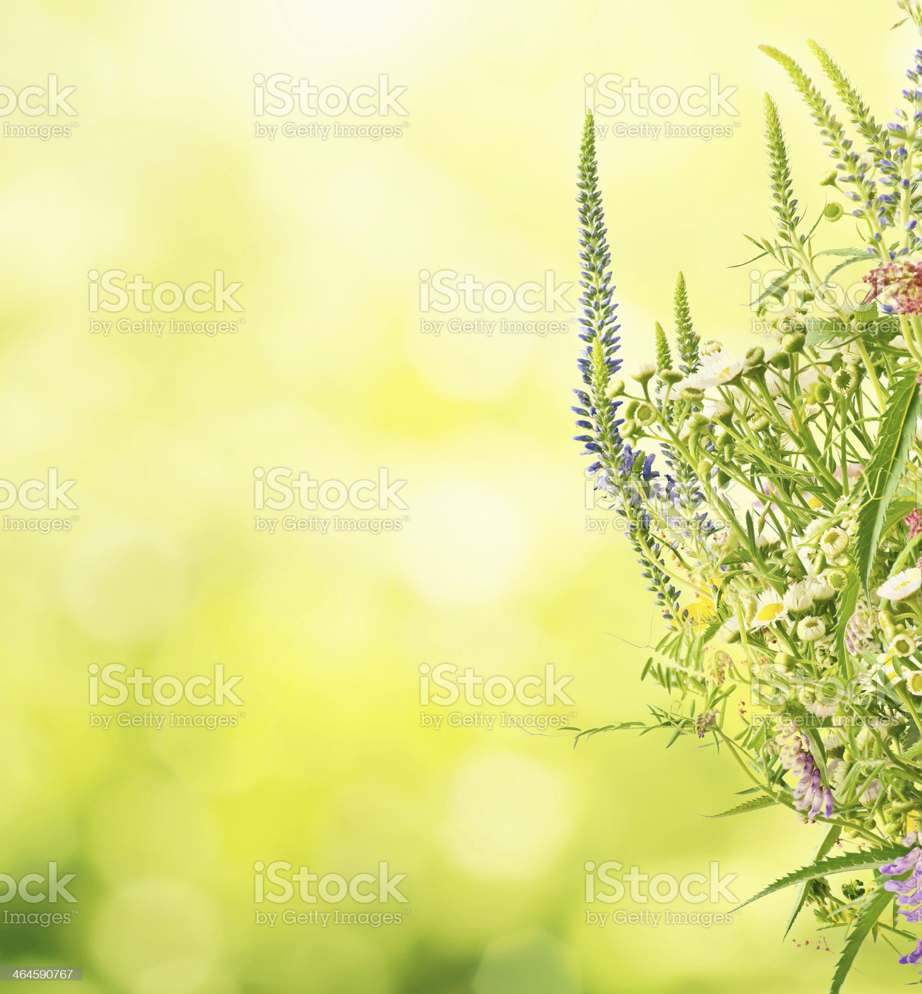 Summer meadow flowers royalty-free stock photo