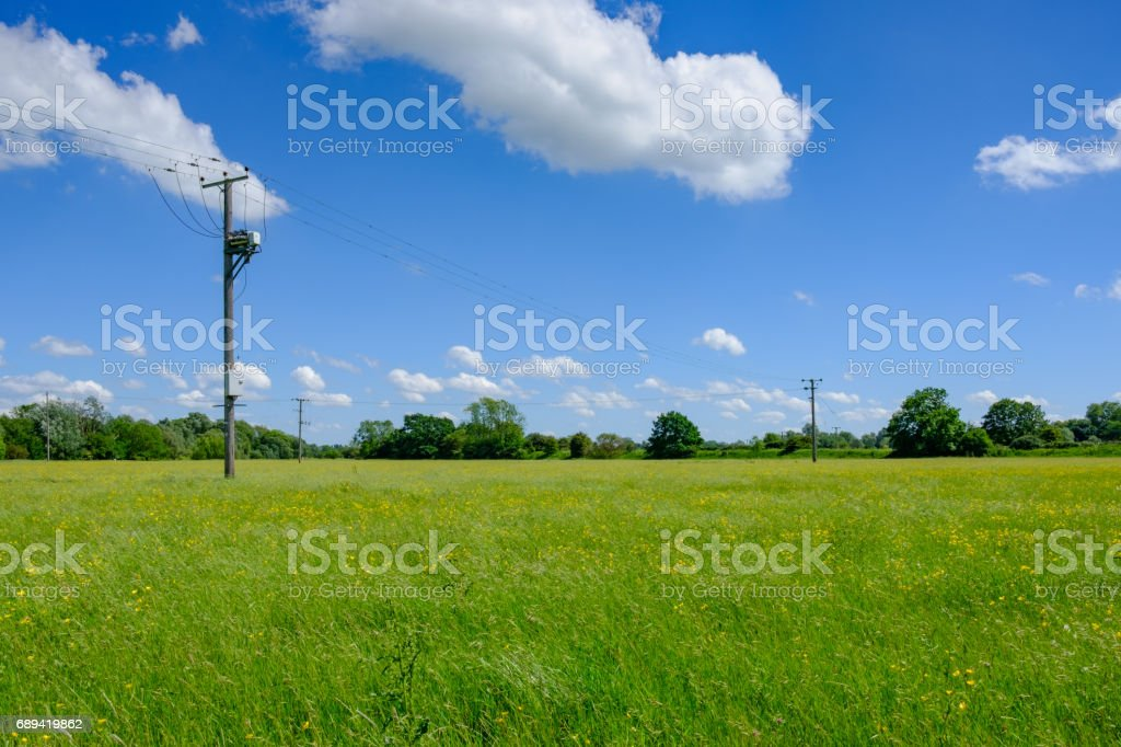 Summer meadow, full of buttercups seen with electricity supply poles. stock photo