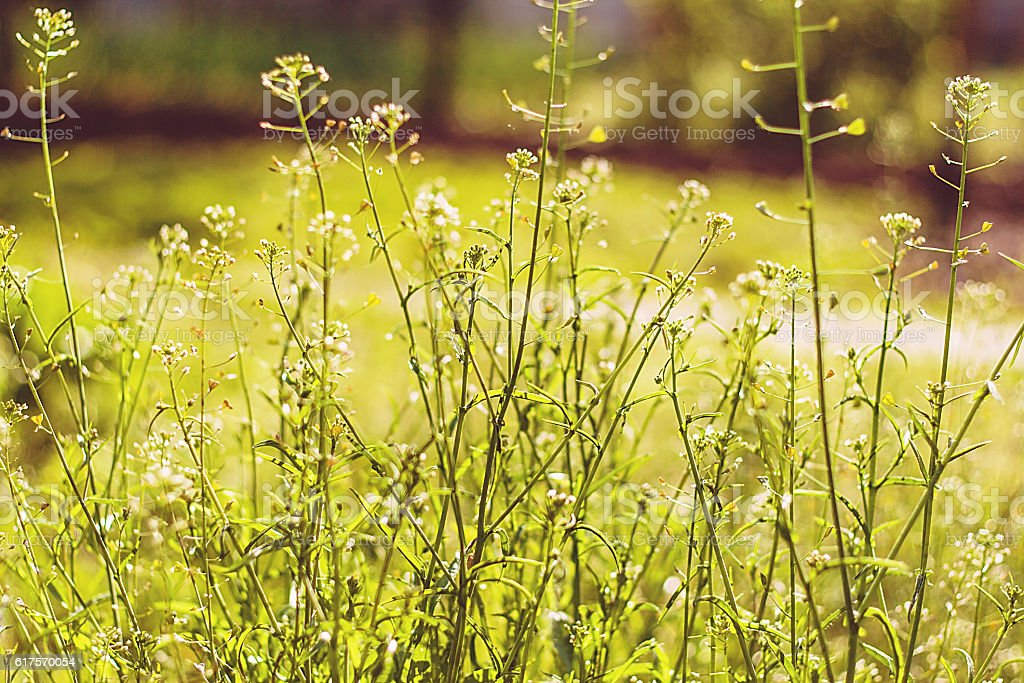 summer meadow grass close-up and blur stock photo