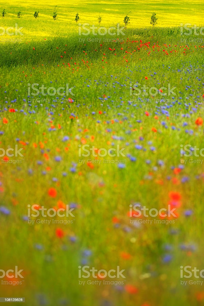 Summer Meadow I royalty-free stock photo