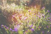 Summer meadow in bright sunlight