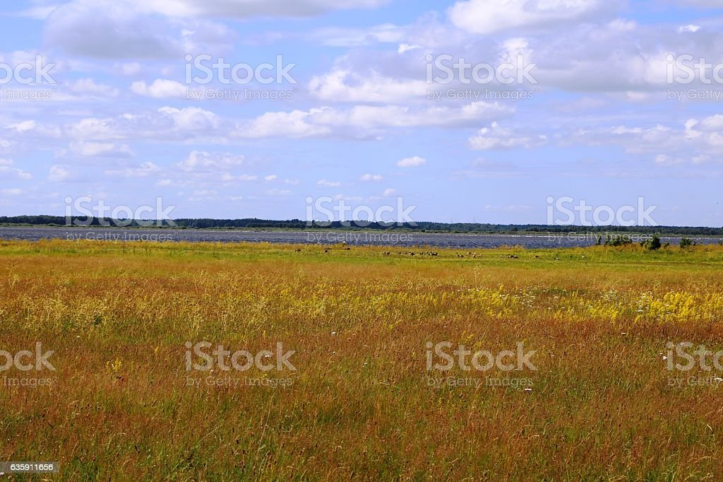 Summer meadow in Hornborgasjöns naturreservat in Sweden, Scandinavia stock photo