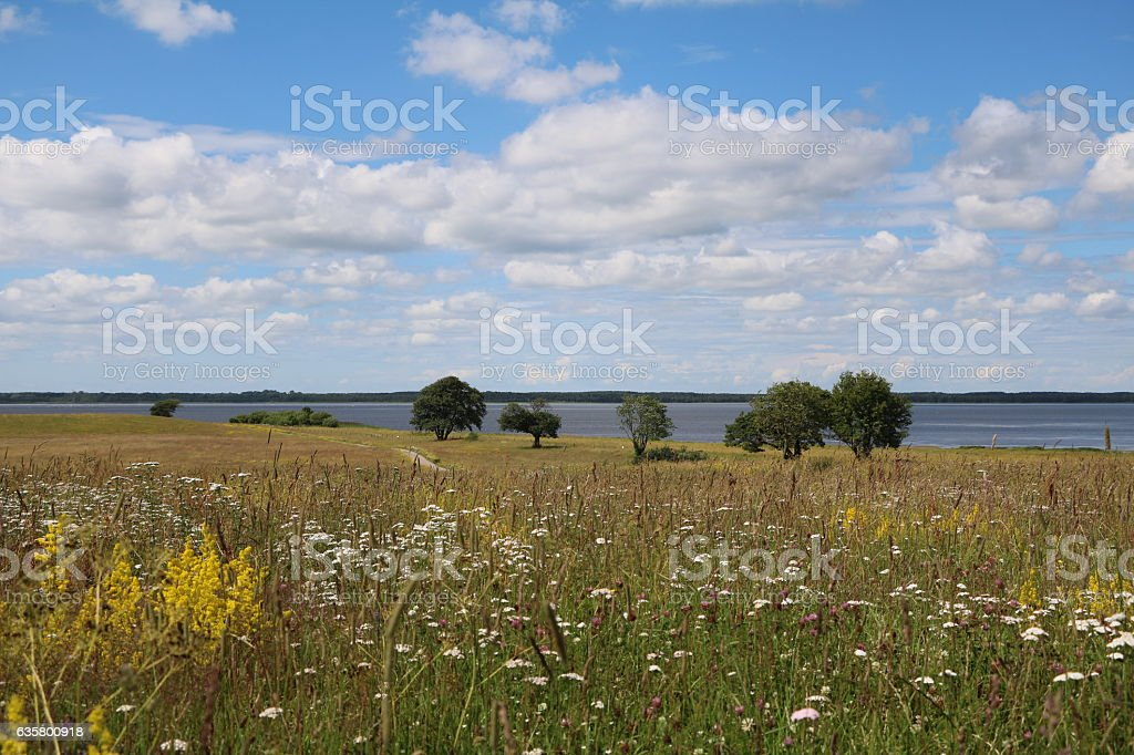 Summer meadow in natur reservat Hornborgasjöns in Sweden, Scandinavia stock photo