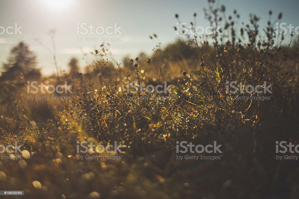Summer meadow in sunset stock photo
