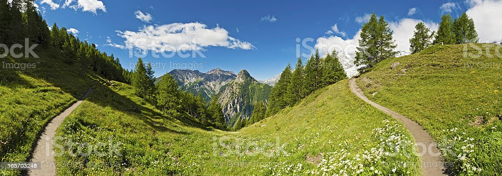 Summer meadow mountain Alpine flowers Italy royalty-free stock photo
