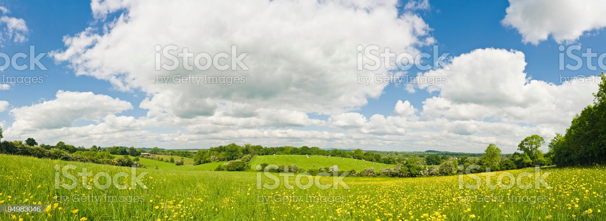 Summer meadow panorama royalty-free stock photo