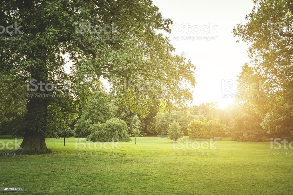 Summer meadow park on sunset stock photo