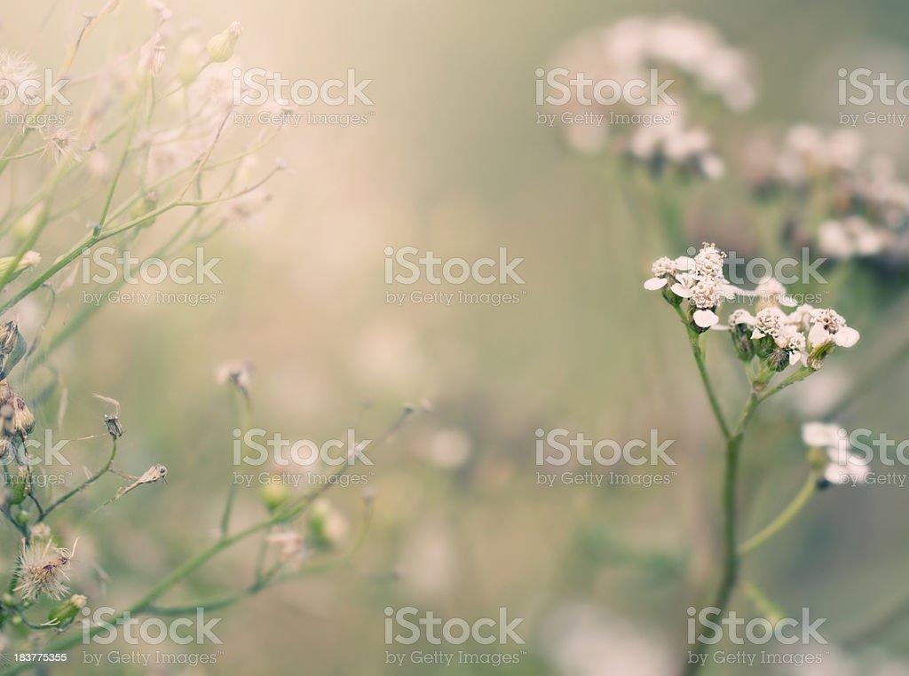 summer meadow stock photo