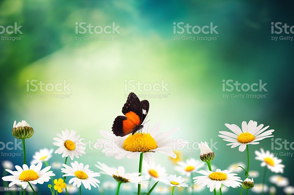 Summer Meadow With Butterfly stock photo