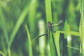 Summer meadow with damselfly