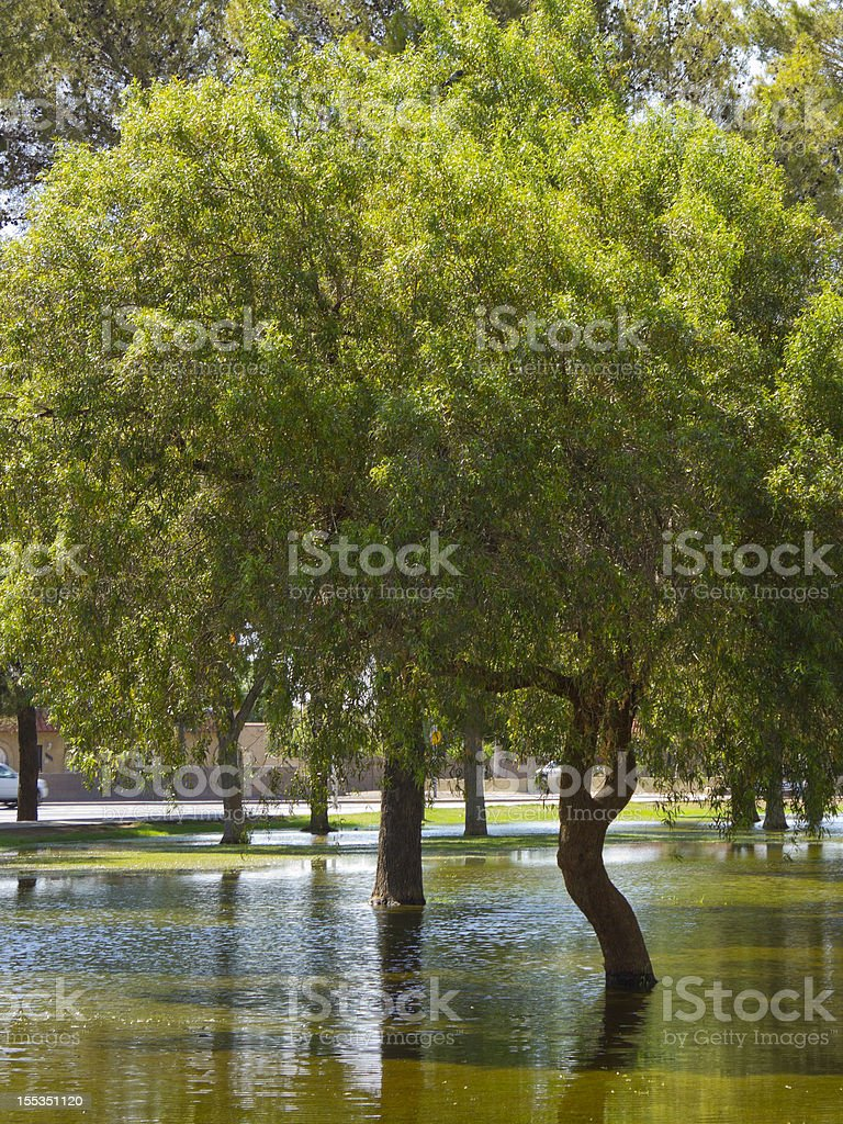 Summer Monsoon in Phoenix park, AZ royalty-free stock photo