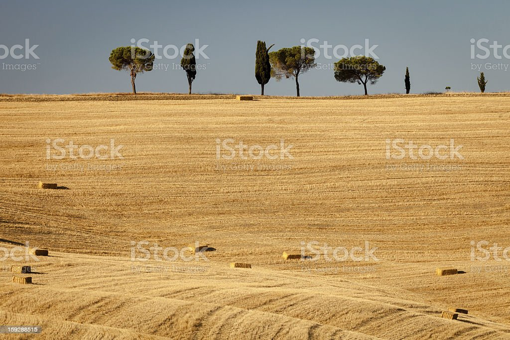 Summer morning in tuscan countryside, Italy royalty-free stock photo
