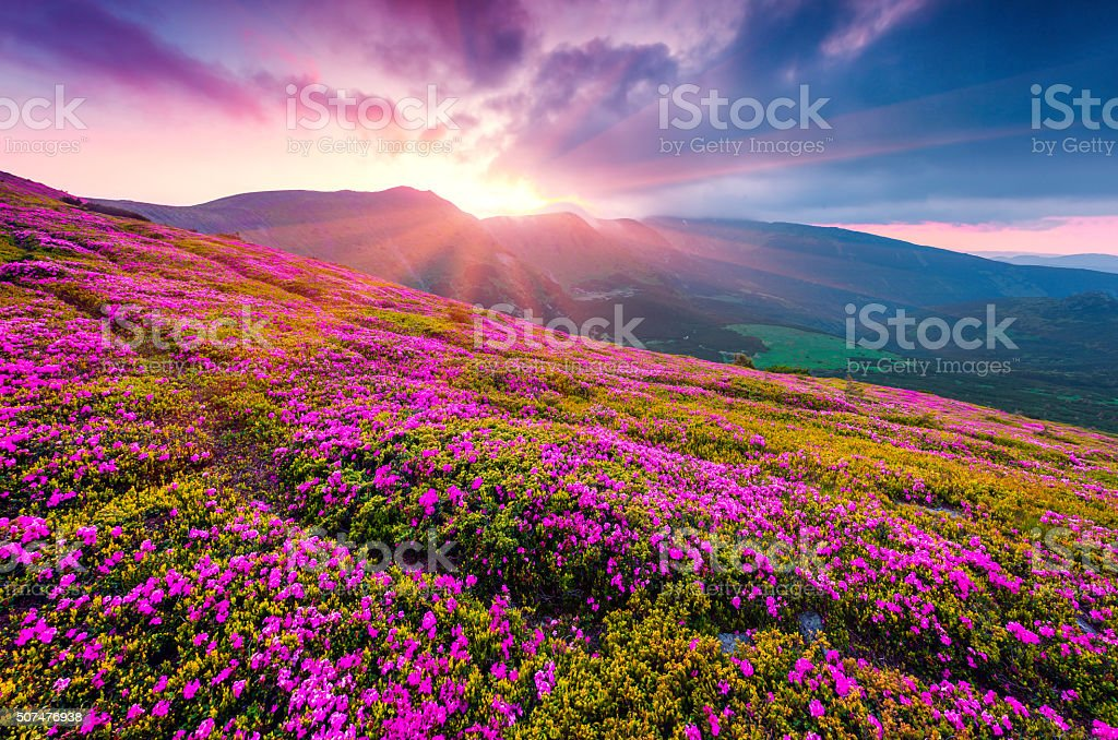 Summer morning scene of Carpathian mountains. stock photo