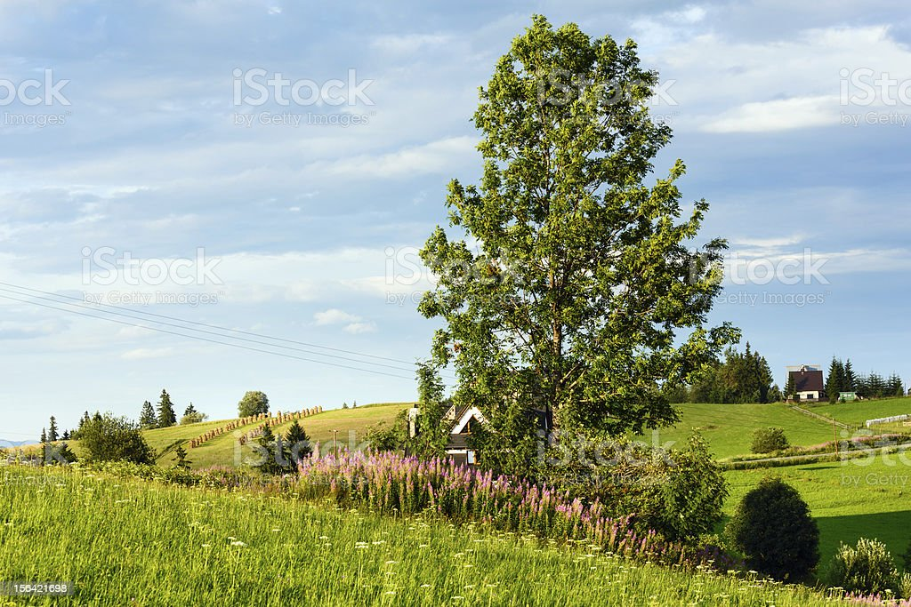Summer mountain country view royalty-free stock photo