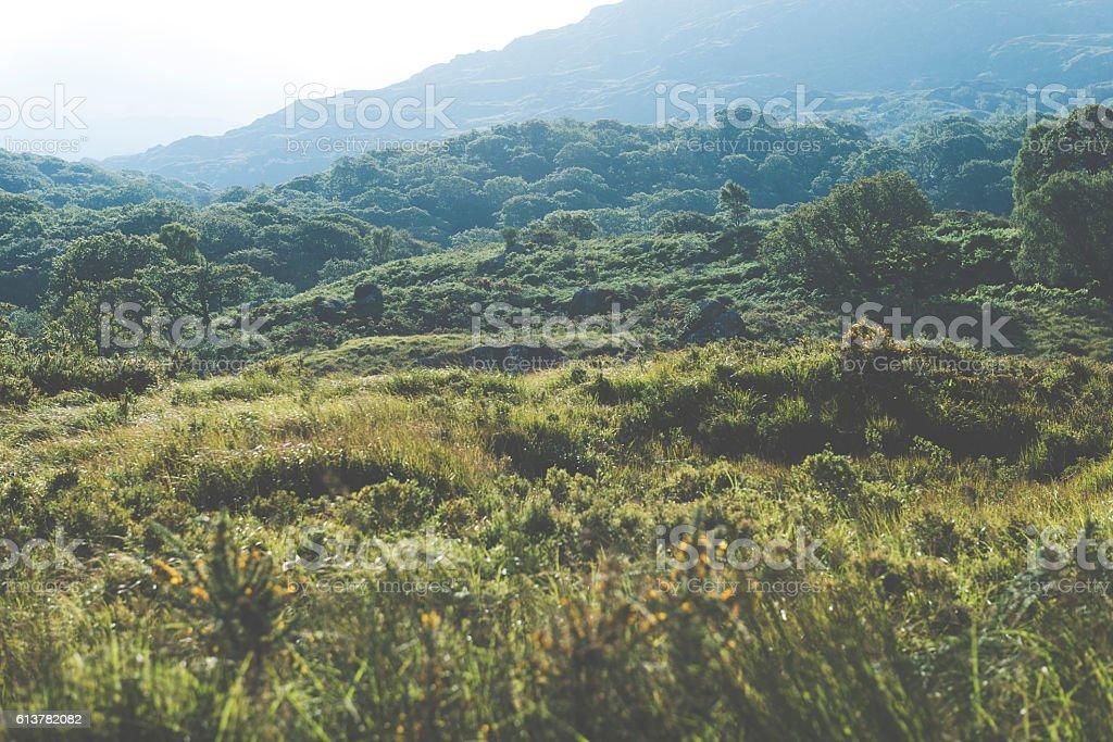 Summer mountain hills landscape stock photo