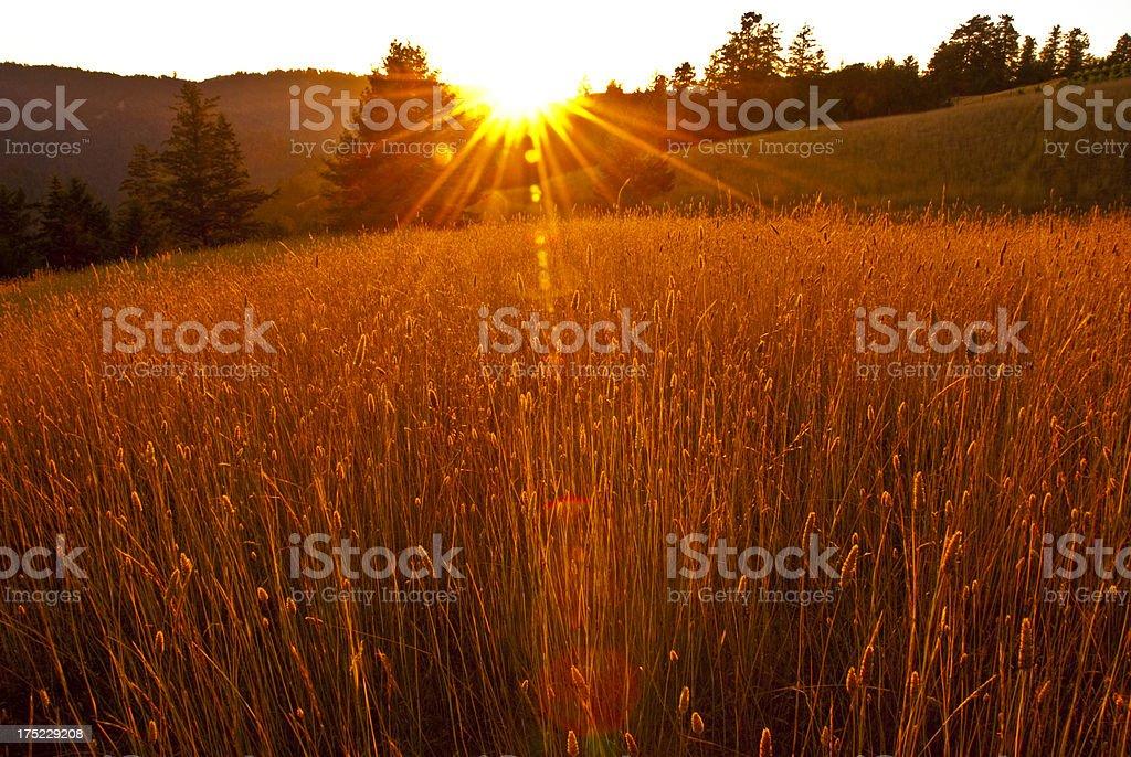 Summer mountain in California royalty-free stock photo