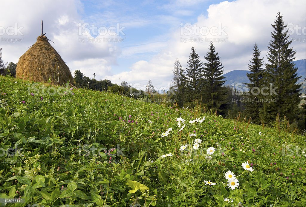 Summer mountain meadow royalty-free stock photo