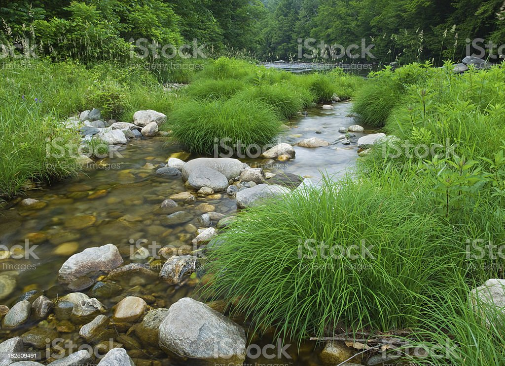 Summer Mountain Stream royalty-free stock photo