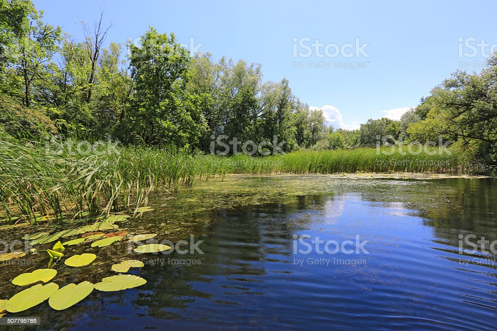 Summer on small river stock photo